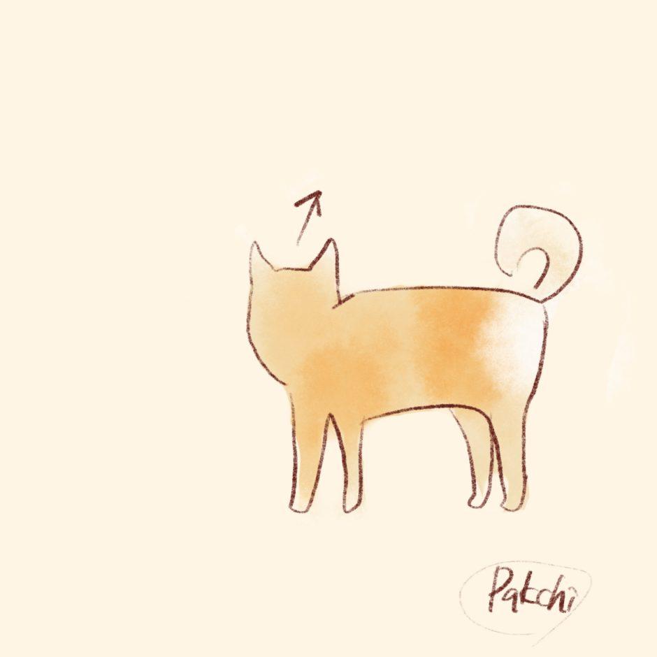 なんとなく柴犬っぽい犬